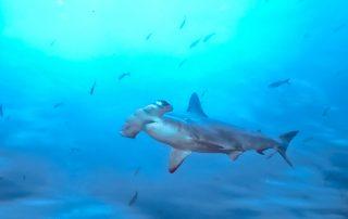 pesca-de-tiburones-en-galapagos