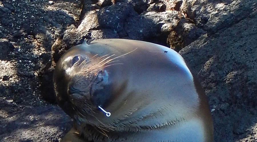 palangre en Galápagos