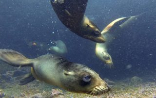 bucear en Galápagos