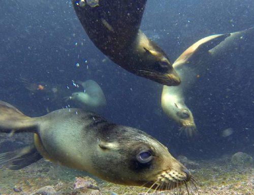 Galápagos bajo el agua