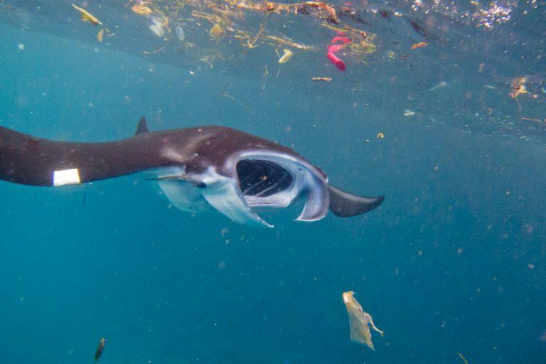 océano contaminado por plástico