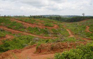 deforestación por palma africana en Ecuador