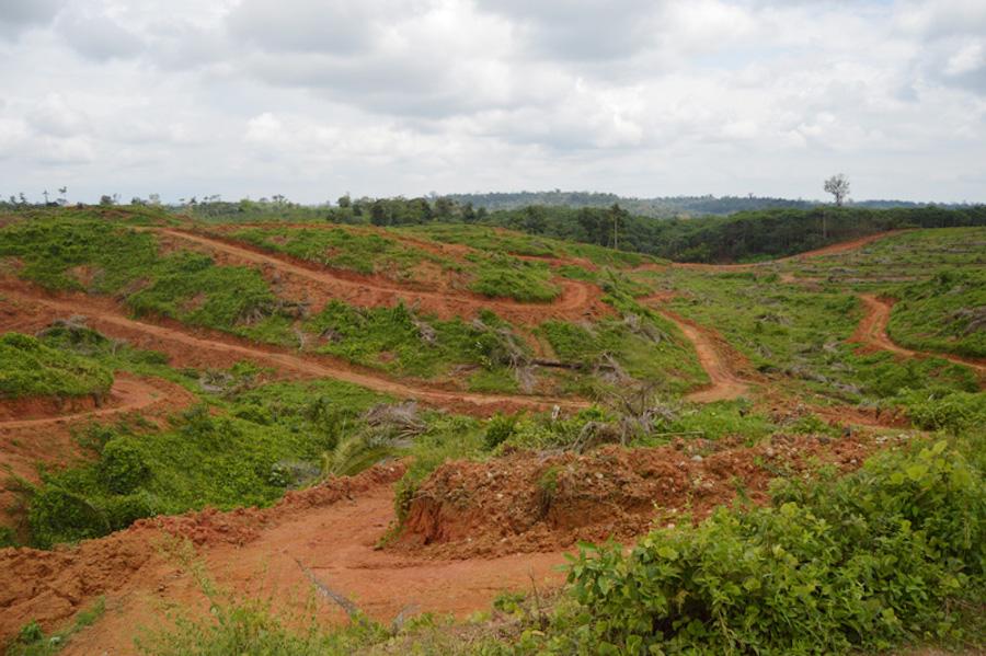 deforestación por palma africana