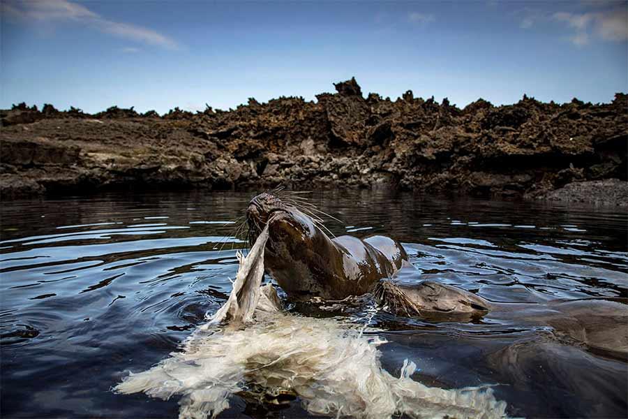 galápagos cambio climático