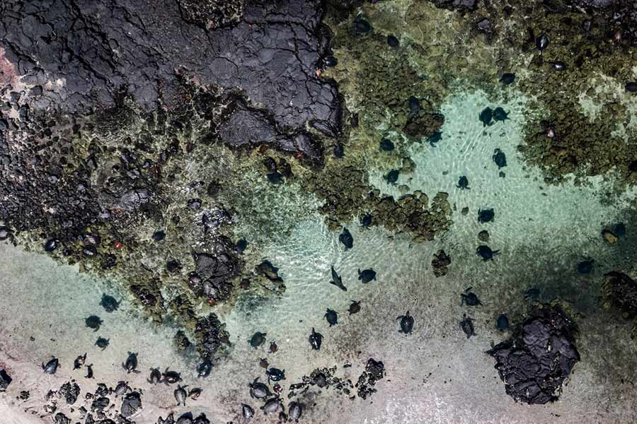isla isabela galápagos