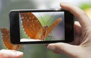 app para detectar especies
