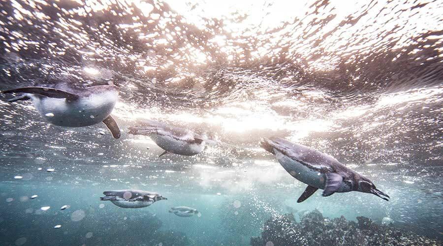 cambio climático en las Galápagos
