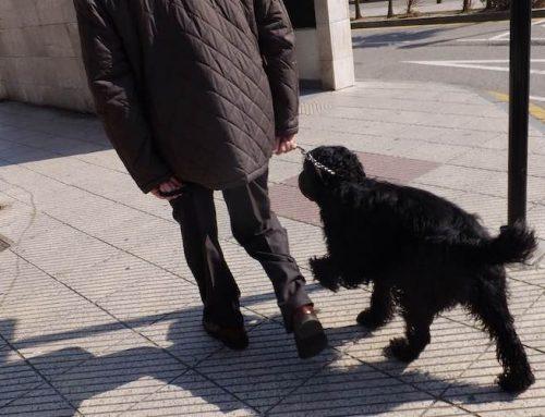 Cómo saber cuándo es momento de decirle adiós a tu mascota