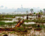 destrucción de la Amazonia