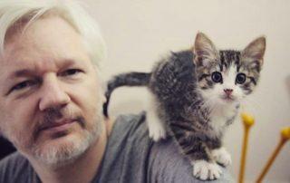 el gato de Julian Assange