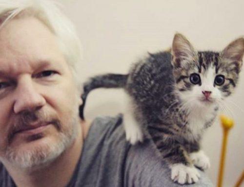 ¿Qué pasó con el gato que vivía con Julian Assange?