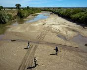 Employees of the United States Fish and Wildlife Service trying to save minnows before a New Mexico section of the Rio Grande dries up.