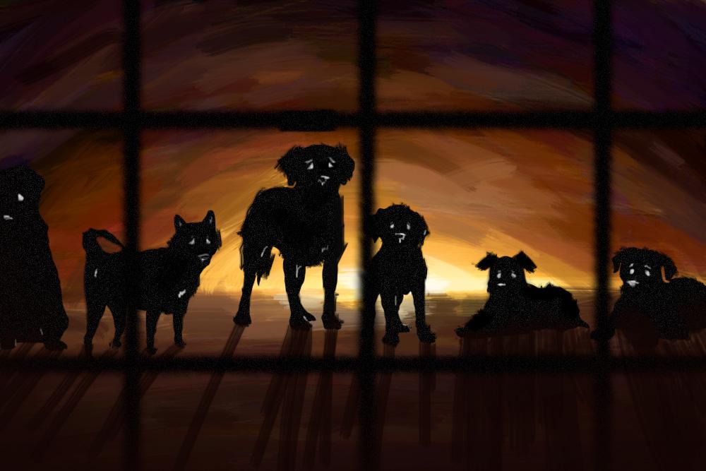 Perros en loja: Polémica tras medidas de eliminación. Ilustración de Daniela Mora Hernández