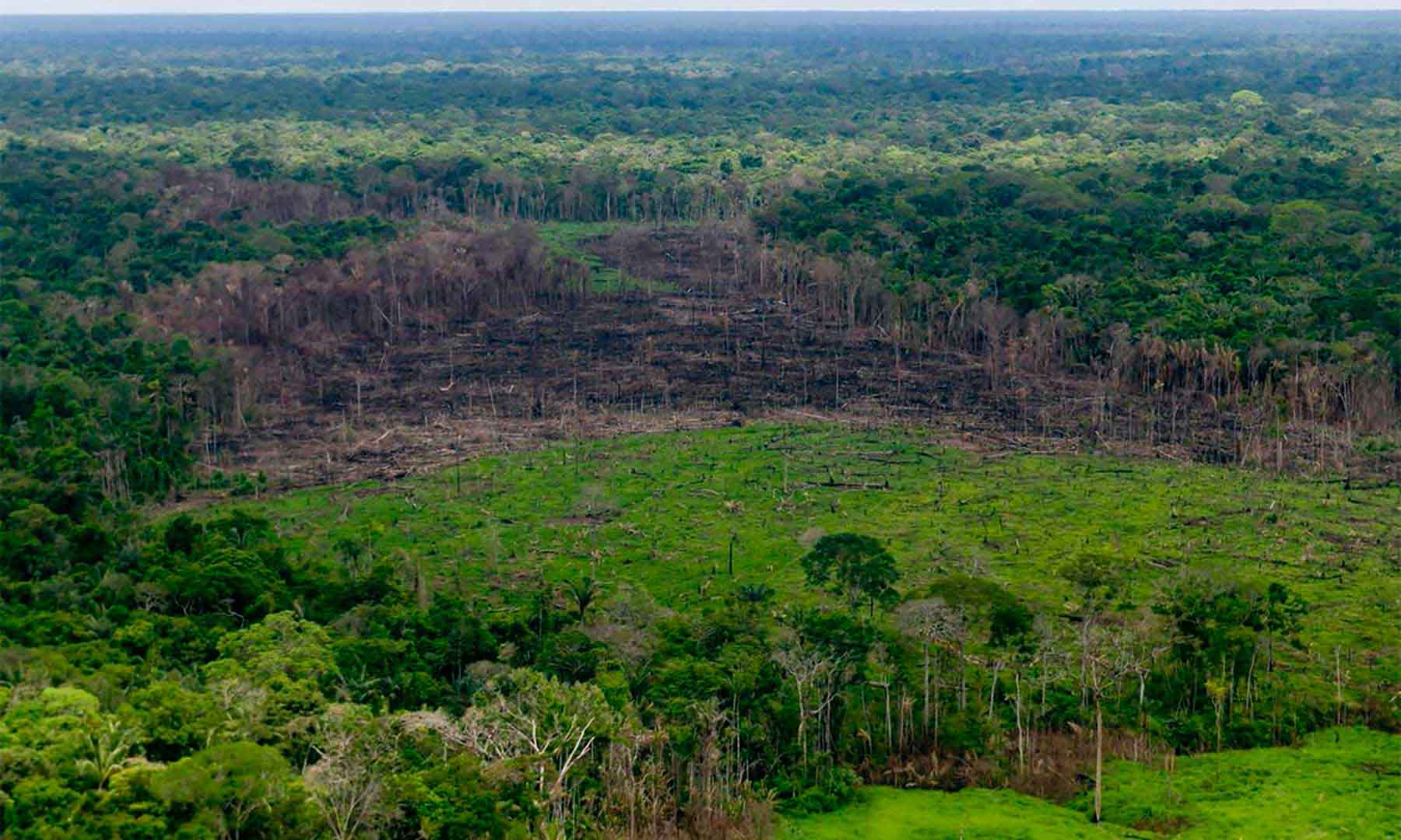 deforestacion-colombia