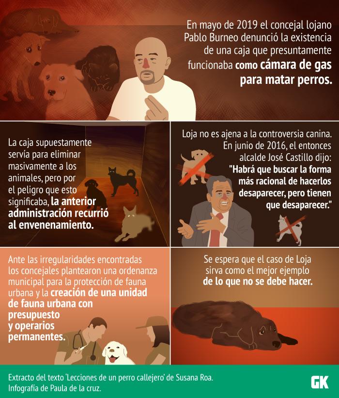 Perros callejeros en Loja: ¿Qué hará el municipio?