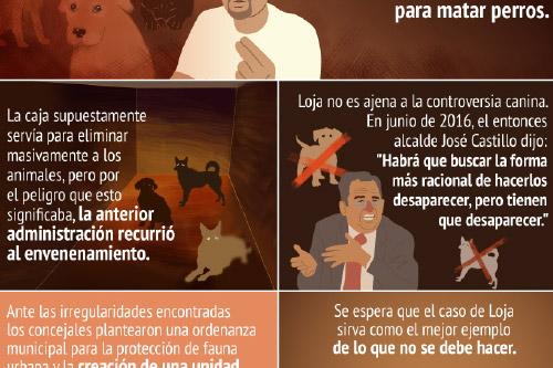Perros callejeros en Loja