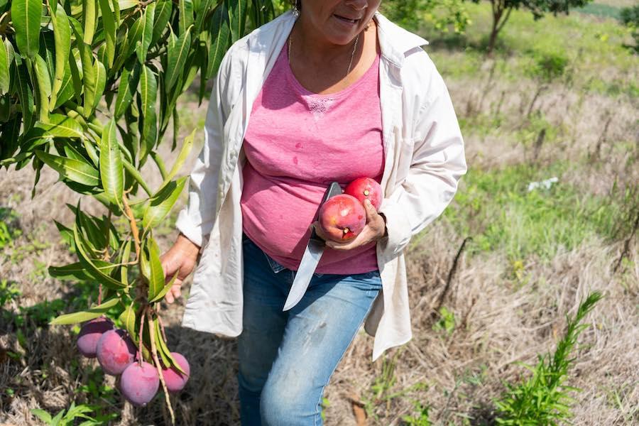 diversificación de cultivos