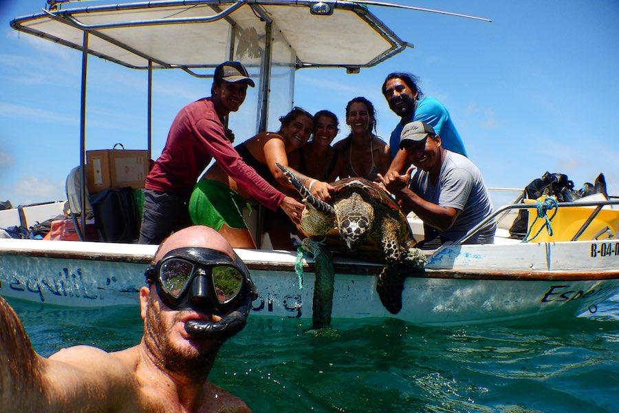 conservación de tortugas carey