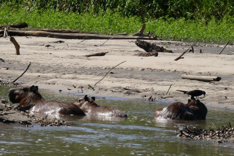 Parque Nacional Manu biodiversidad