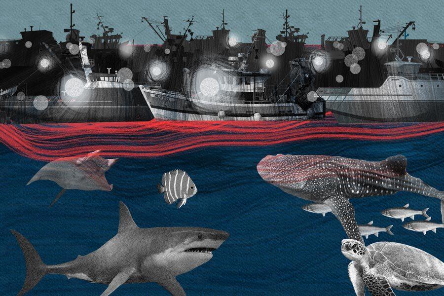 que hacer con la flota china