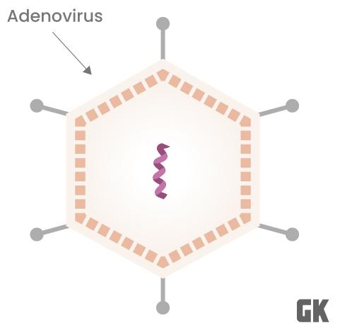 Vacunas adenovirales