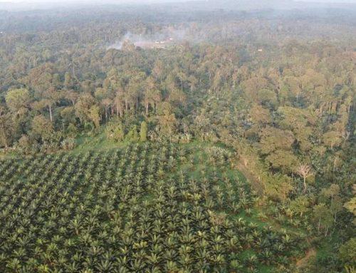 Comuna de Barranquilla insiste en denuncia contra palmicultora por contaminación e invasión de tierras