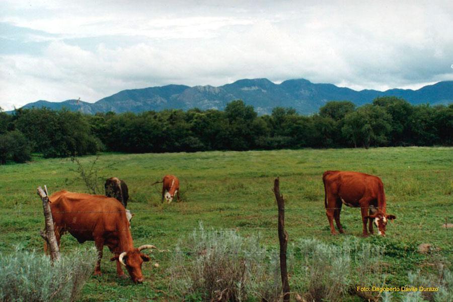ordenanza para el bienestar animal de Quito